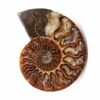 Fóssil de amonita polida e serrada