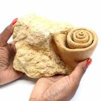 Fóssil de gastrópode