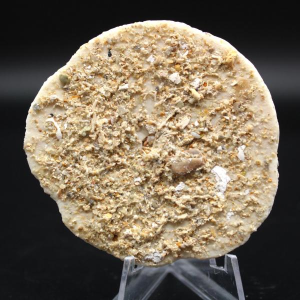 Scutella, fóssil de ouriço do mar